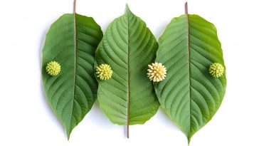 What is the American Kratom Association?