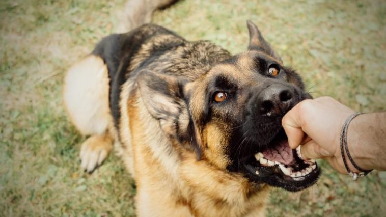What You Need to Know About Dog Bites