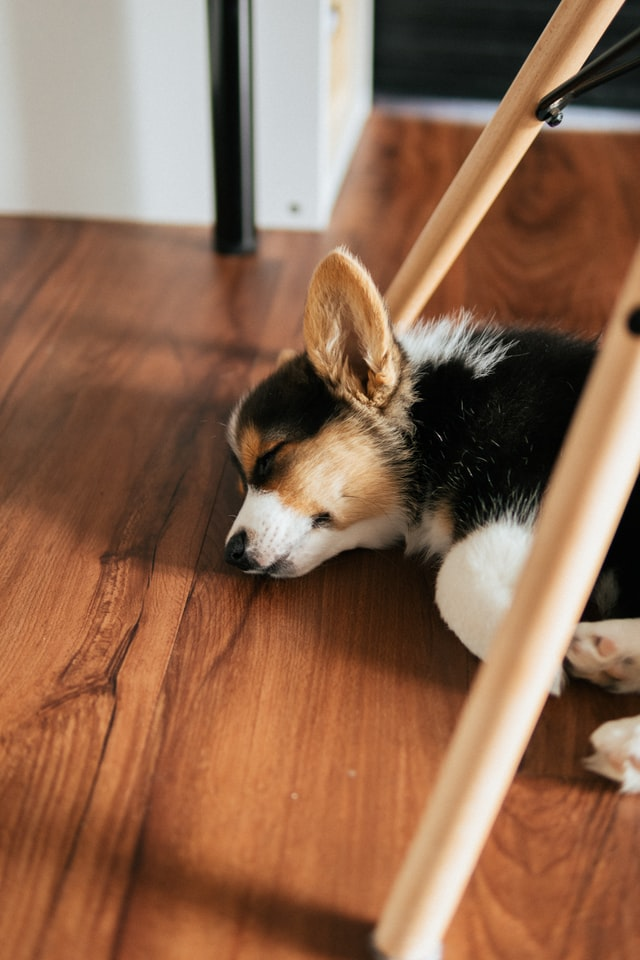 Is Laminate Flooring Best for Dog Owners