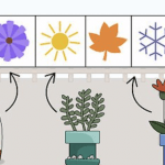 Follow These Steps When Planting Flowers