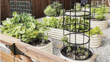 How To Produce Your Perfect Garden with Raised Garden Bed