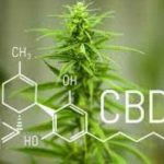 What Are Cannabinoids and How Do They Work