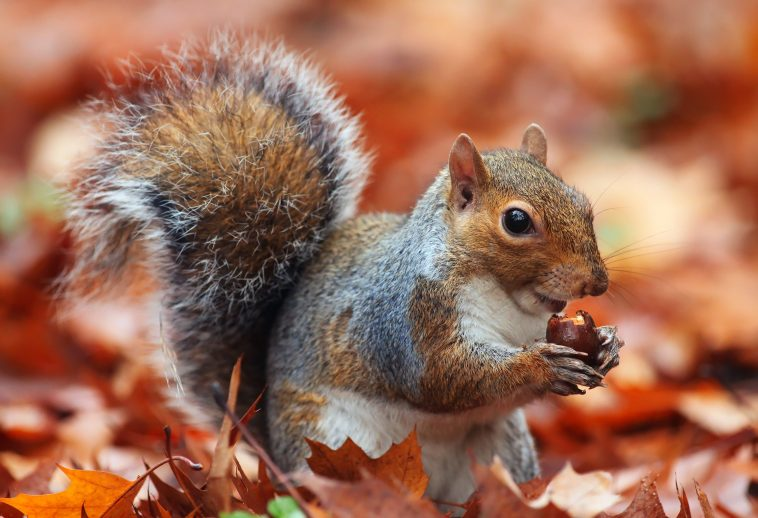 7 Home Maintenance to Keep Squirrels Off Your Property