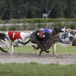 Greyhound racing: big races to look forward to in November