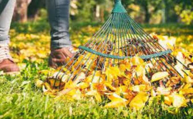 What is the Best Rake for Leaves